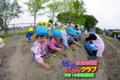 サツマイモ苗植え(秋田県秋田市の楽しい幼稚園 新屋幼稚園)