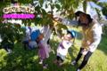 カキもぎ(秋田県秋田市の楽しい幼稚園 新屋幼稚園)