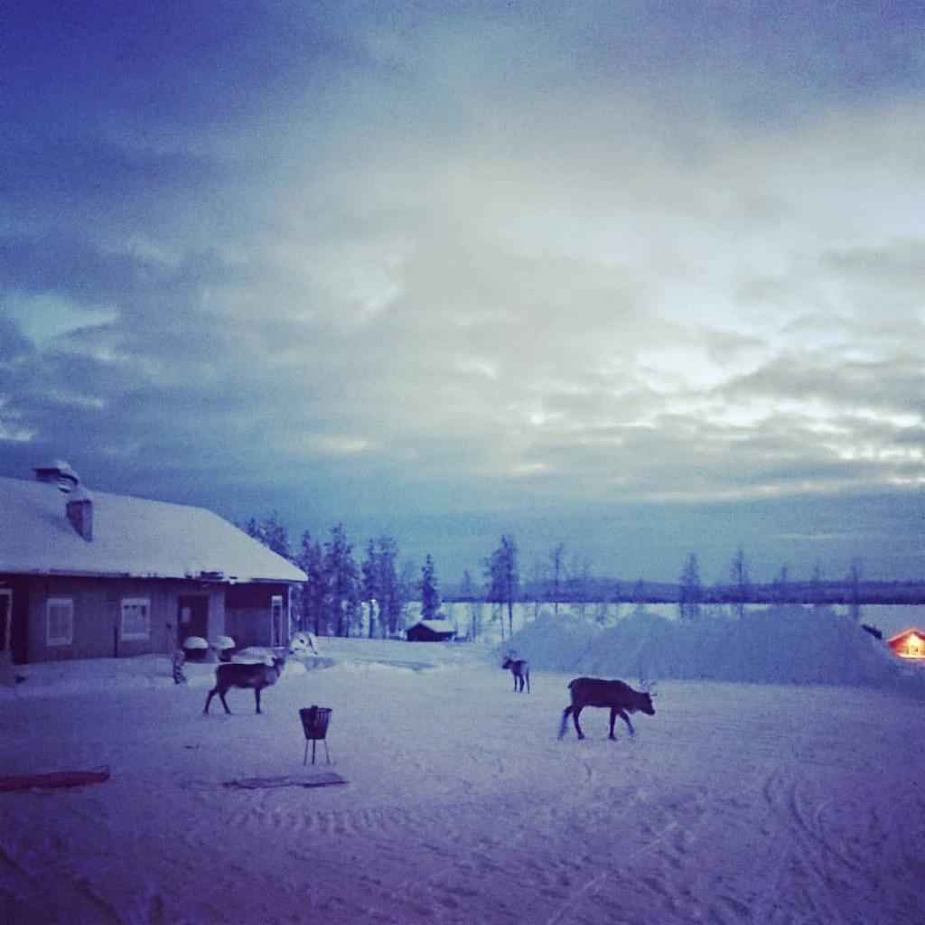 f:id:arcticmaricorima:20191231235918j:image
