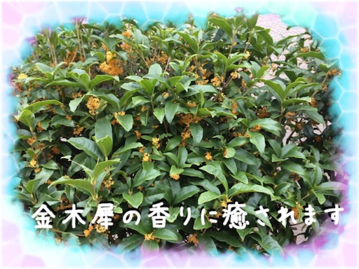 f:id:arigatai3939:20171017121742j:image