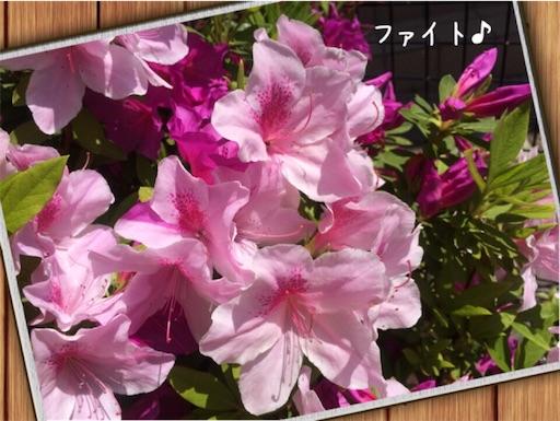 f:id:arigatai3939:20180423094546j:image