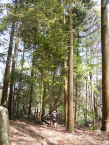 f:id:arigirisu:20110410121916j:image