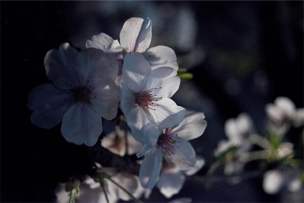 f:id:ariki_com:20180328084509j:image