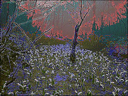 f:id:arikui:20071112231318p:image