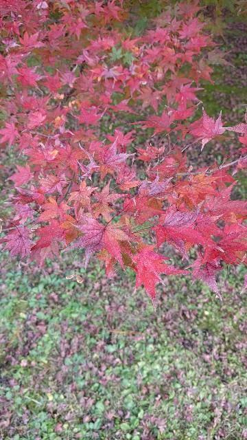f:id:arisawa_nanase:20161201000141j:image