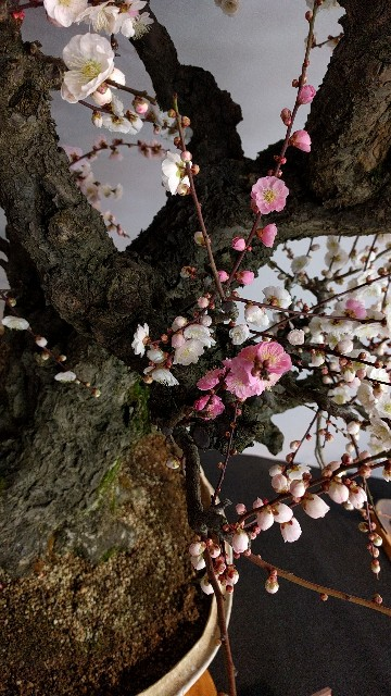 f:id:arisawa_nanase:20170226210245j:image