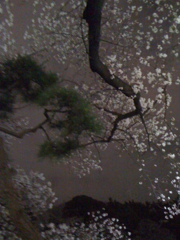 f:id:arishiki:20120406191634j:image:w360