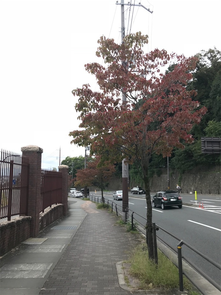 f:id:arisugawag:20181006210529j:image
