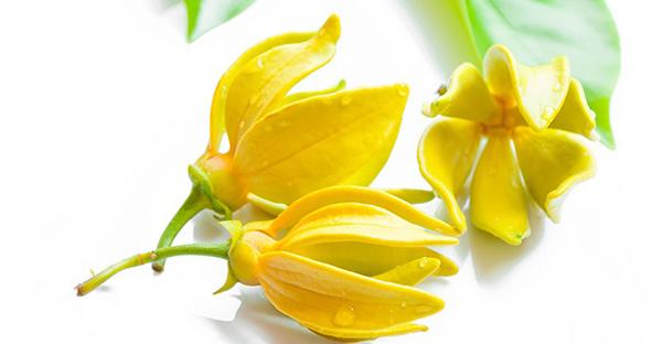f:id:aroma-aspire:20161116174932j:plain