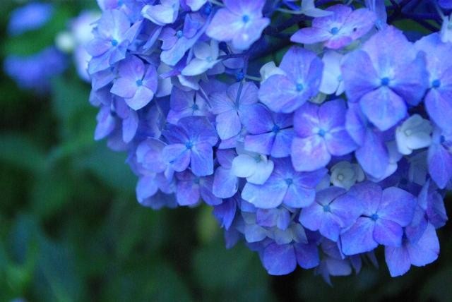 f:id:aroma-mallow:20200618142309j:plain