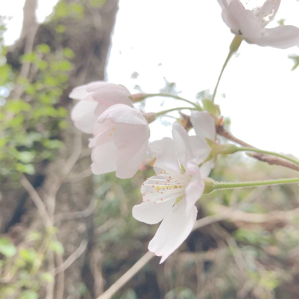 f:id:aroma-mallow:20210404095202j:image