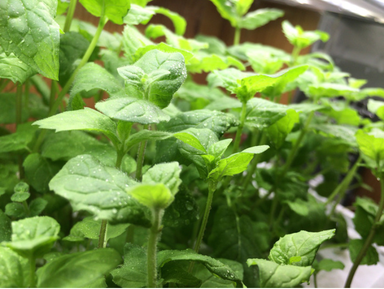 f:id:aromaplant:20171012205710p:plain