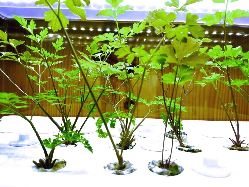 f:id:aromaplant:20171013123145j:plain