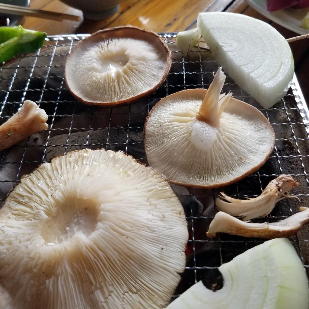 f:id:aromaplant:20171106065515j:plain