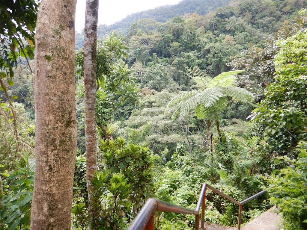 フィリピン・ドゥマゲッティ のカサロロ滝の鬱蒼としたジャングル