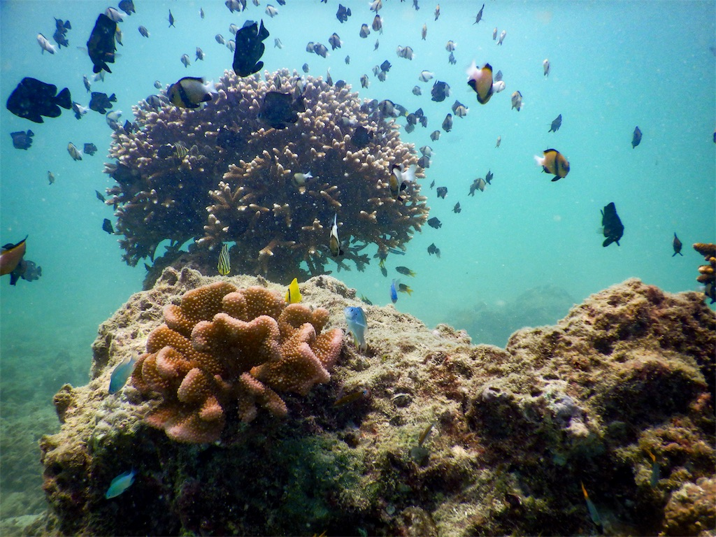 たくさんも熱帯魚がサンゴ礁の周りを泳いでいる写真