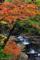 本谷川渓谷の紅葉2