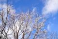 八ヶ岳高原・大泉の空