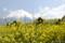 MtFuji_0904291113_菜の花
