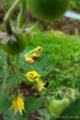 Frog_090707_1666