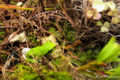 Frog_090707
