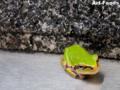 MyGarden_Frog_090720