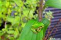 Frog_090721-1