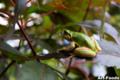 Frog_0907211307