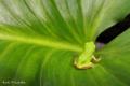 Frog_0908011341