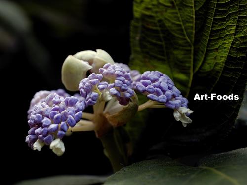 f:id:artfoods:20090914101208j:image