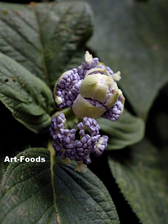 f:id:artfoods:20090914101216j:image:w250