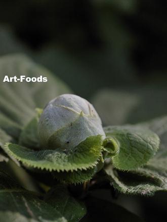 f:id:artfoods:20090914101226j:image:w250