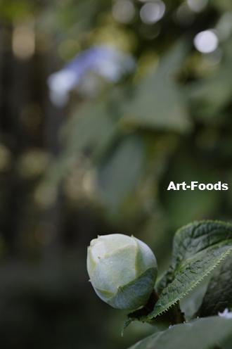 f:id:artfoods:20090914101228j:image:w250