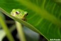 Frog_0909141631