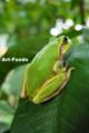Frog_0909141641