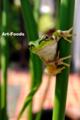 Frog_0909171156