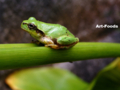 Frog_0909171146