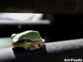 Frog_0909171151