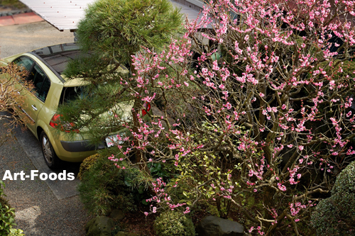 f:id:artfoods:20100220061200j:image