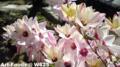 庭の花_100501