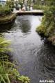 泉の里親水公園_100815_3