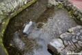 泉の里親水公園_100815_6