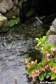 泉の里親水公園_100815_8