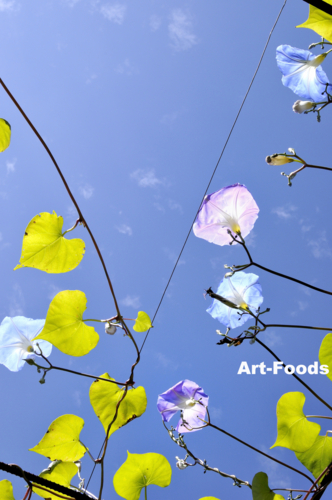 f:id:artfoods:20101017163237j:image:w240:right