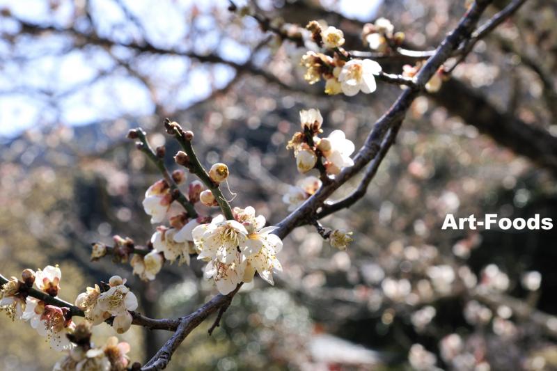 f:id:artfoods:20110307155948j:image:w320:left