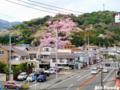 蒲原・御殿山の桜_110410n2