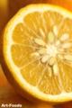 ナゾの柑橘_110521-2