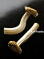 新種のキノコ_111221