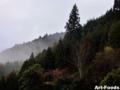 山間の霧_120311