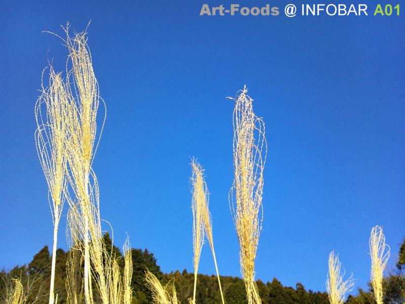 f:id:artfoods:20120313061741j:image:w360
